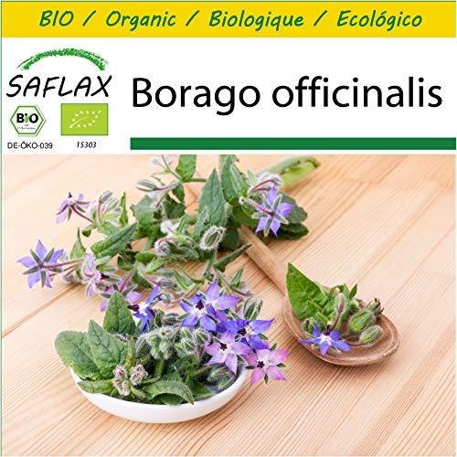 SAFLAX - Kit de culture - BIO - Bourrache - 40 graines - Avec mini-serre, substrat de culture et 2 pots - Borago officinalis