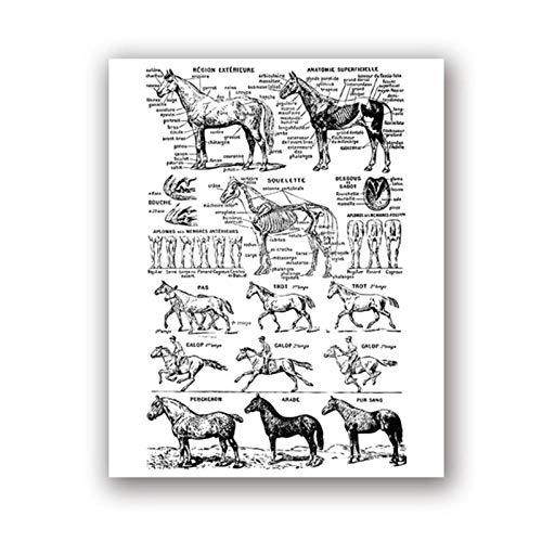 Art Canvas schilderij paard Print zwart-wit veterinaire medische Poster paard anatomie illustratie Wall Art foto Wall Decor / 50x70cm geen frame