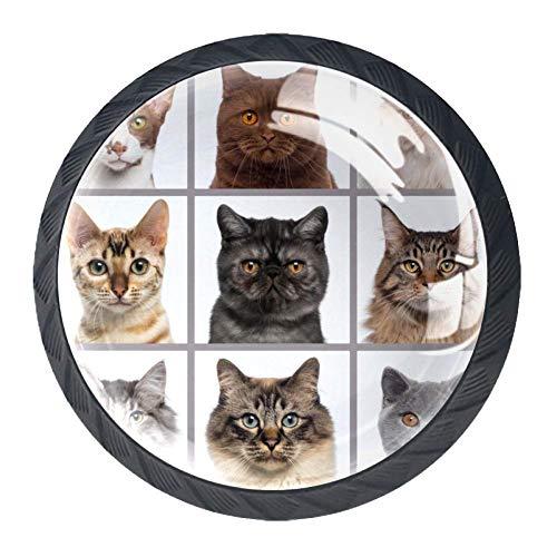 Neuf têtes de chat regardant la caméra 4 pièces boutons d'armoire de cuisine poignée pour porte de tiroir placard penderie mur manteau crochets