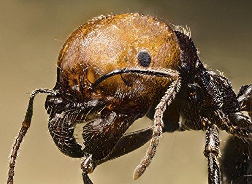 Ameisenfarm Starterkit (Ameisen mit Königin FREE) - 9