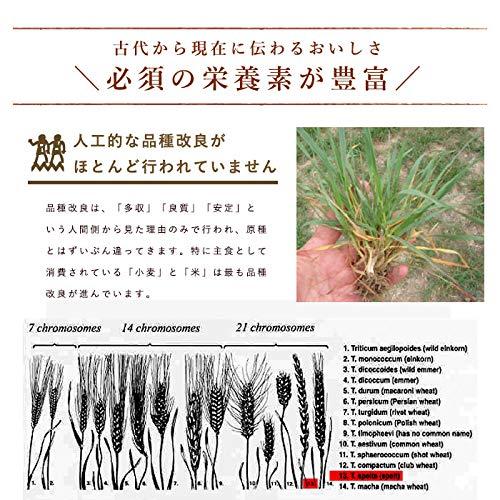 スペルト小麦粉西尾製粉1kgスペルト小麦古代小麦__