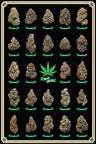 Close Up Póster Cannabis Best Buds Tipos de Marihuana (61cm x 91,5cm) + 2 Marcos Transparentes con suspención