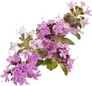 Creeping Thyme 400 Purple Flower Seed - Ground Cover Plants, Perennial Flower Seeds, Micro Clover Seed Wild Flower Moss, Thymus Serpyllum - Magic Carpet