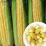 sanhoc zlking 20pcs mais dolce giallo heirloom fresh organic verdure frutta waxy mais facile in rapida crescita verdura