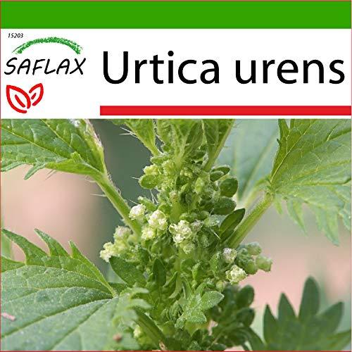 SAFLAX - Heilpflanzen - Brennessel - 150 Samen - Mit keimfreiem Anzuchtsubstrat - Urtica urens