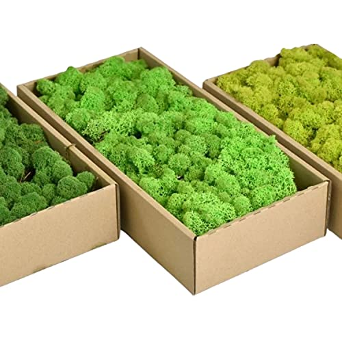 Islandmoos - Das original Islandmoos zum basteln und Dekorieren. Echtes Naturprodukt. Dekomoos, Moos zum basteln, Deko Moos natur konserviert (0.5 Kg, Frühlingsgrün)