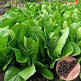 P12cheng Seed Plant - Bolsa de semillas vegetales (500 unidades), color amarillo