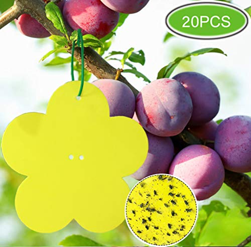 Panngu Lot de 20 pièges Autocollants Double-Face, Jaune Sticky papiers pour Blanc Feuille de Mouches Les pucerons Lutte Contre Les Insectes, Dealing with The Pest Problem in a Decorative Way.