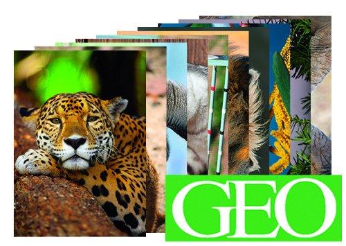10er-Set: Postkarten A6 +++ MIX SET Nr. 2 von modern times +++ 10 tierische GEO-Motive +++ perfekt für POSTCROSSING +++ ohne deutschen Text!