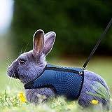 Verstellbares Weiches Kaninchen Geschirr mit Elastischer Leine für Kleines Tier Kitty Haustier Geschirr und Leine für Häschen Katze Little Pet Walking (L(Brust 28 -35cm), Blau)