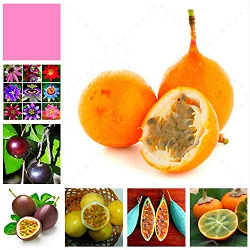 Violet: Bonsaï En Pot De Passiflora Graines Rares Fleurs Plantes Passion Fruit Graine De Passiflore Arbre Pour La Décoration De Jardin 20 Pcs Un Sac