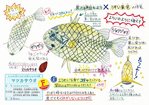 さかな博士のレアうま魚図鑑