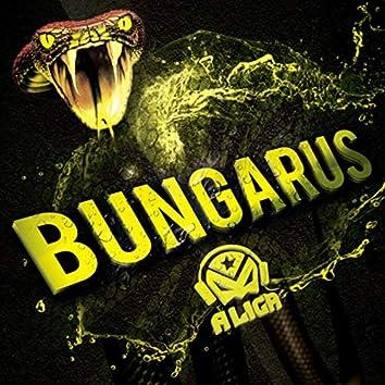 Bungarus