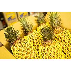 数量限定 台湾産 パイナップル 約4.5kg 台農17号 台湾鳳梨 果物 フルーツ