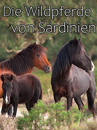 Die Wildpferde von Sardinien
