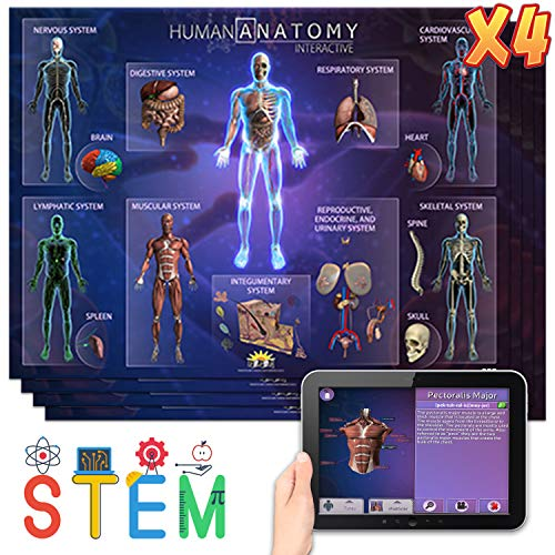 Popar Human Anatomy Mat with App - 4 Pack (Small)
