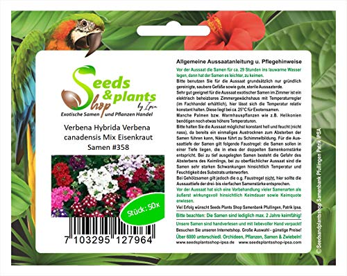 Stk - 50x Verbena Hybrida canadensis Mix Eisenkraut Pflanzen - Samen #358 - Seeds Plants Shop Samenbank Pfullingen Patrik Ipsa
