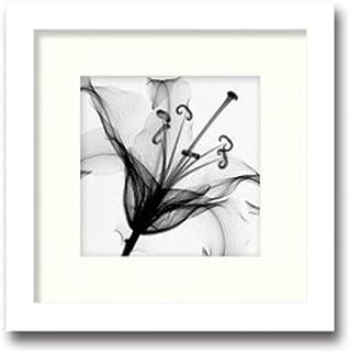 K-ART.JAPAN 絵画 インテリアアート Steven N.Meyers W350xH350xD15mm 絵画 「Lily Muscadet」 AS-11373