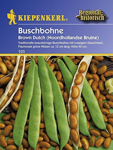 Buschbohne Brown Dutch
