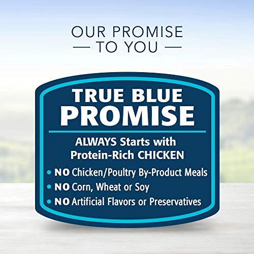 Cat | Blue Buffalo Healthy Gourmet Natural Adult Pate Wet Cat Food, Indoor Chicken 12.5-oz cans (Pack of 12), Gym exercise ab workouts - shap2.com