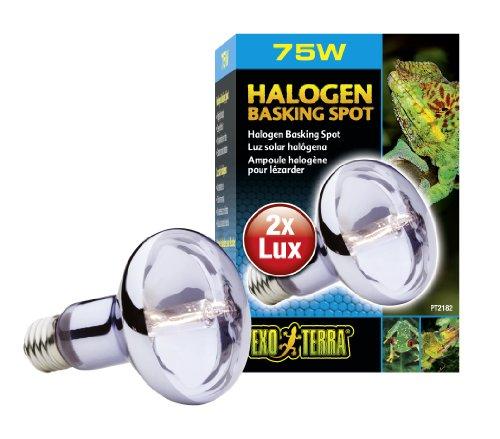 Exo Terra Halogen Basking Spot Breitspektrum Tageslichtlampe 75W