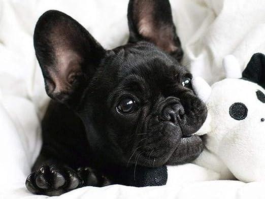 20X30cm Black White Dog 5D DIY Diamant Peinture Compl/ète Foret Bouledogue Diamant Broderie Animal Pitbull Chiens Strass Cadeau de Mosa/ïque