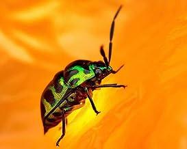 Hxfhxf Pintar Por Números Para Kits De Escarabajo Verde Lienzo Para Colorear Decoración Para Principiantes En El Hogar Imagen Pintada A Mano Arte Moderno 40x50CM