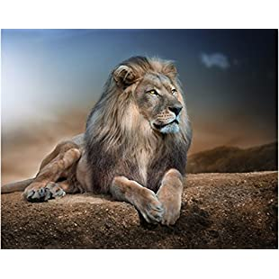 Bescita 5D Diamond Painting Full Kits DIY Handmade Rhinestone Embroidery Cross-Stitching Set Mosaic Home Room Decoration (African Lion):Donald-trump