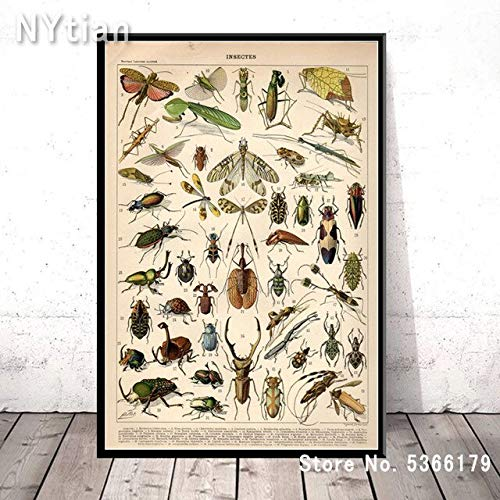 shuimanjinshan Gift Variety Insects Bees Biology Chart Animal Posters And Prints Wall Art Canvas Picture Painting Home Living Room Decoration 50X70Cm No Frame H-7873