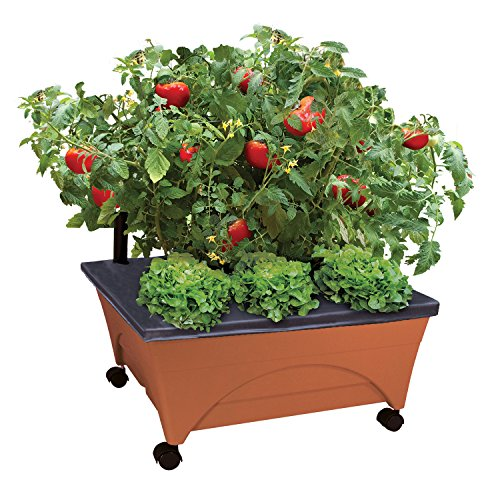 Emsco Group City Picker Raised Bed Grow Box – Self Watering and Improved Aeration – Mobile Unit with Casters