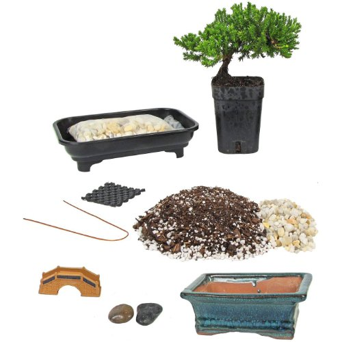 Eve's Deluxe Bonsai Tree Starter Kit, Complete Do-It-Yourself Kit with 4 Year Old Japanese Juniper
