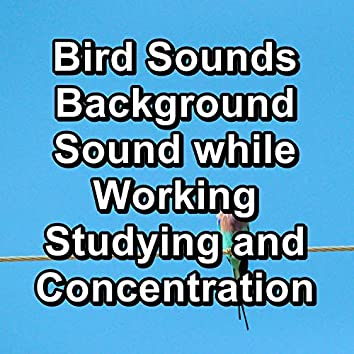 Bird Sounds Background Sound while Working Studying and Concentration