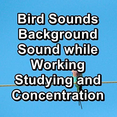 Sounds and Birds Song, Calming Bird Sounds & Relax Bird Sounds