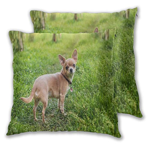 WINCAN Square Cushion Cover 50x50cm 2 pieces Set,Santa Chihuahua Christmas Berries,decorative Throw Pillow Case for Couch Sofa Chair Bed Home office Decor