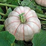 Semillas de calabaza de color rosa 25 Semillas de calabaza muñeca de porcelana calabaza ornamental R...