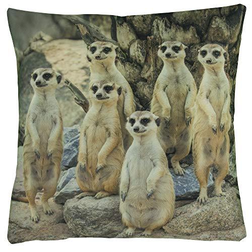 Kissenhüllen Kissenbezug 40x40 Kissen Dekokissen Kuschelkissen Tiermotive (Afrika Erdmännchen)