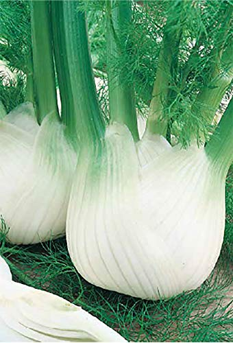 Germisem Fino Semillas de Hinojo 2 g