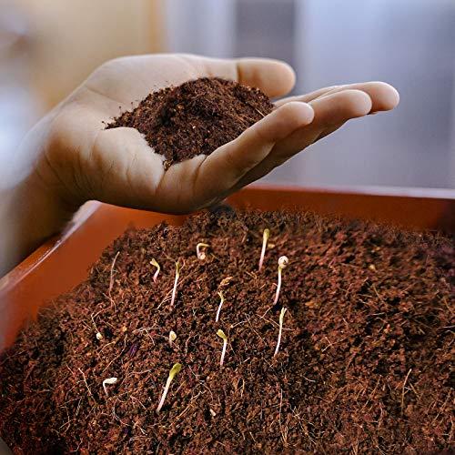 Kokos Blumenerde 70l gepresst - Kokoserde torffrei & ohne Dünger als Humusziegel - Kokossubstrat als Pflanzerde Anzuchterde Aussaaterde Gartenerde - auch für Orchideen & Terrarien geeignet