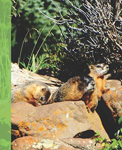 Marmot Erwachsene Never Winter Long Schlafsack Cilantro//Tree Green LZ