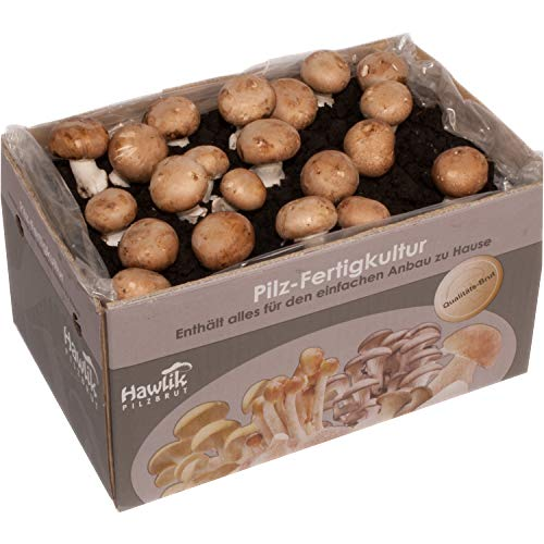 Große 10kg XXL Steinchampignon Pilzkultur I Hawlik Pilzbrut I kinderleicht Pilze selber züchten I ohne Vorkenntnisse I Geschenk