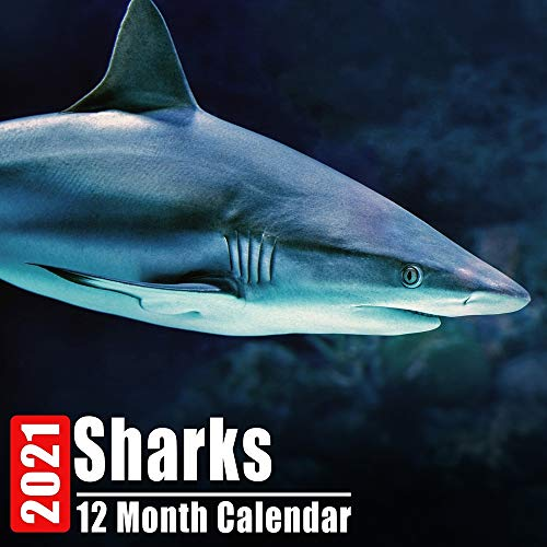 Calendar 2021 Sharks: Cute Shark Photos Monthly Mini Calendar With Inspirational Quotes each Month