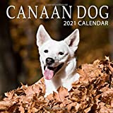 Canaan Dog 2021 Calendar: Perfect for Notes and Planning, Monthly and Weekly