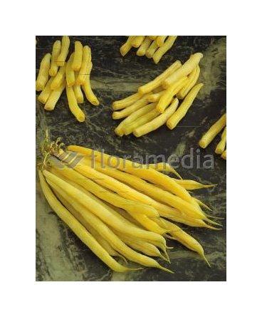 Les Graines Bocquet - Graines De Haricot Nain Mangetout Beurre Fructidor 70G - Graines Potagères À Semer - Sachet De 70Grammes