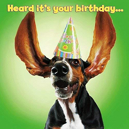 Carte Blanche 3D-Hologramm-Close-Up Hund mit Hut-Party gehört it's your betrachten.