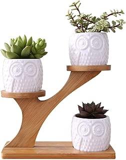 Aoforz-jumobao Simple White Succulent Plant Flower Pot Holder Ceramic Owl Pumpkin Pattern Pot Treetop Shaped Bamboo Shelf Pot Planter Set