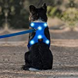 Lighted Dog Vests Review and Comparison