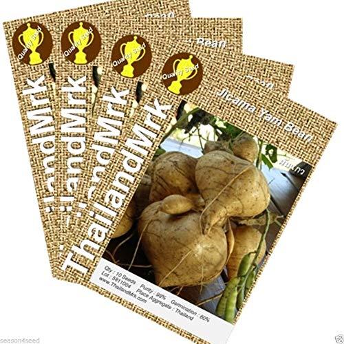 FERRY Bio-Saatgut Nicht nur Pflanzen: Thai Jicama Yam b Yambohne Faceae Seeds ThailandMrk