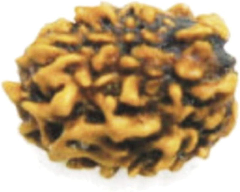 Numeroastro Original Natural 3 Mukhi Streng Bead Rudraksha For Max Max 69% OFF 56% OFF