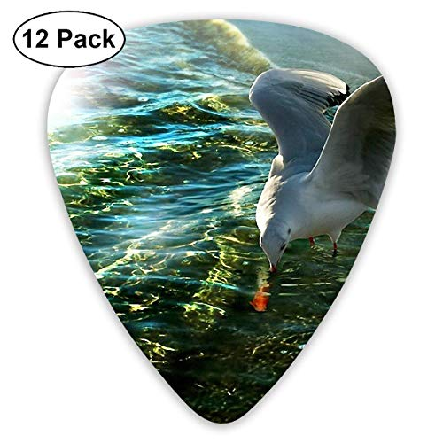 Plektrum 351 Form Klassische Gitarre Picks Seagull Picture Plectrums Instrument Standard Bass 12er Pack