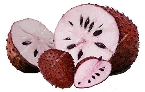 10pcs/sac de sucre rares Graines Bonsai Annona squamosa Plante en pot tête Fruit de Bouddha Crème anglaise Planta Decor Garden 2